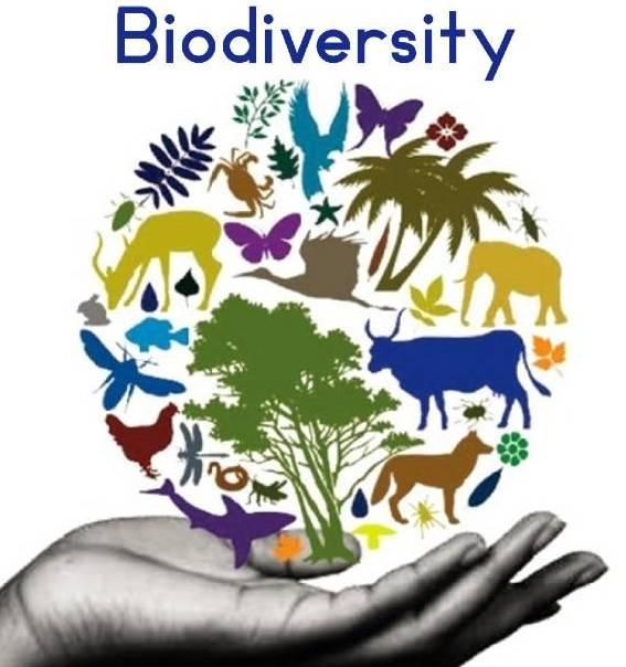 biodiversity-types-importance-conservation